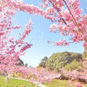 台中,千櫻園 / 福壽山農場。粉嫩登場!滿開的櫻花拍到飽,免門票免停車費路程就是要有心理準備啦!