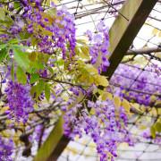 【桃園-大園區】和春花卉農場
