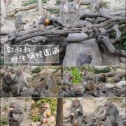 【台中景點】郭叔叔野生獼猴園,與獼猴的近距離相望,有獼猴的生態解說更不要錯過餵食秀喔!。台中旅行、台中半日遊、全家人一起出遊景點