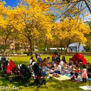 北屯廍子公園│黃金風鈴木盛開,賞花還能溜小孩 - 達人Emily的播報台