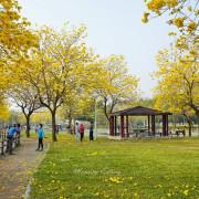 台中大坑│廍子公園-黃花風鈴木盛開滿滿金色花海,順遊粉紅情人橋、大坑美食一日遊