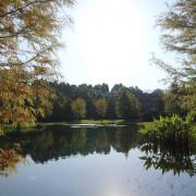 。苗栗食記。南庄雲水度假森林Cloudland Resort。落羽松祕境、馬卡龍民宿、溫泉泡湯度假去