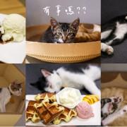 花蓮正當冰來台北開分店~正當冰北投店:冰淇淋、鬆餅、貓咪中途