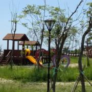 苑裡景點-櫻花林步道˙錦山公園 苑裡山腳最高點-櫻花林步道觀景台