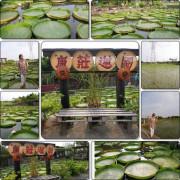 【桃園觀音拍照景點】康莊農園(大王蓮)❤❤IG超夯拍照熱點❤❤