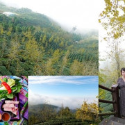 南投鹿谷一日遊美食景點 ▶ 銀杏森林、武岫農圃 ▶ 美到像畫 茶園景觀、銀杏森林步道、絕美雲海、銀杏養生火鍋 鹿谷景點、銀杏森林交通!