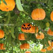 2019桃園觀音萬聖南瓜節,展期:2019.10.19~11.03止~