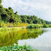 桃園大溪月眉人工濕地生態公園。落羽松+倒影拍照真不賴。免費景點