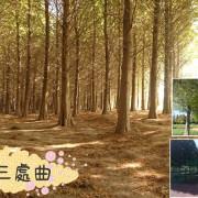 [桃園八德]2019落羽松三處曲:八德落羽松森林-霄裡大池落羽松林-落羽松大道