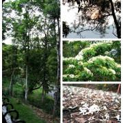 走入山林只為掬一捧桐花--三義綠波浪會館