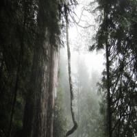 宜蘭縣休閒旅遊 景點 森林遊樂區 棲蘭國家森林遊樂區 照片