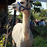 台中市休閒旅遊 景點 觀光農場 月眉天馬牧場 照片
