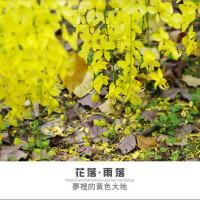 台北市休閒旅遊 景點 景點其他 內湖潭美阿勃勒 照片