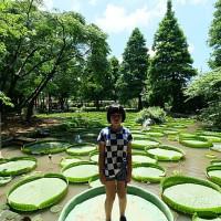 捲捲頭。品味生活在桃園一日遊推薦⎮向日葵迷宫、大王蓮體驗X水上蓮花鞦韆、IG打卡迷你版撒哈拉! pic_id=6402888