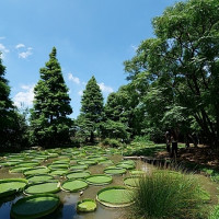 捲捲頭。品味生活在桃園一日遊推薦⎮向日葵迷宫、大王蓮體驗X水上蓮花鞦韆、IG打卡迷你版撒哈拉! pic_id=6402887