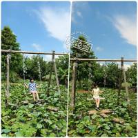 捲捲頭。品味生活在桃園一日遊推薦⎮向日葵迷宫、大王蓮體驗X水上蓮花鞦韆、IG打卡迷你版撒哈拉! pic_id=6402892