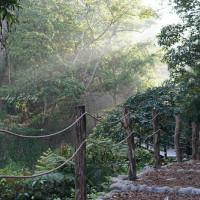 貪吃猴在大坑5-1號登山步道 pic_id=6700403