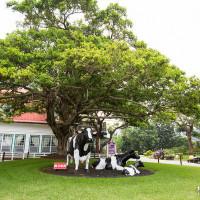 苗栗縣休閒旅遊 景點 觀光農場 飛牛牧場 照片