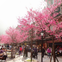 新北市休閒旅遊 景點 觀光商圈市集 烏來賞櫻大道 照片