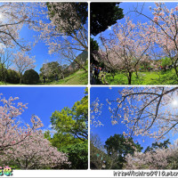 台北市休閒旅遊 景點 公園 陽明山國家公園 照片
