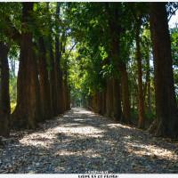 高雄市休閒旅遊 景點 公園 新威森林公園 照片