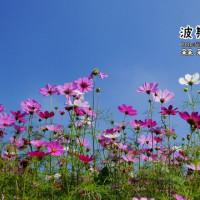 台北市休閒旅遊 景點 森林遊樂區 樟湖步道 照片