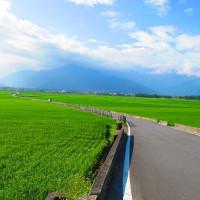 台東縣休閒旅遊 景點 景點其他 伯朗大道 照片