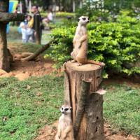 新竹縣休閒旅遊 景點 遊樂場 六福村主題遊樂園 照片