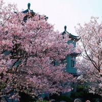 台北市休閒旅遊 景點 古蹟寺廟 東方寺 照片