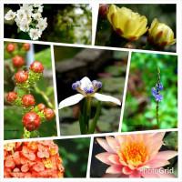台北市休閒旅遊 景點 觀光林園 台北植物園 照片