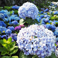台北市休閒旅遊 景點 觀光花園 大梯田花卉生態農場 照片