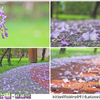 新北市休閒旅遊 景點 公園 永和仁愛公園 照片