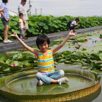 台南市休閒旅遊 景點 景點其他 白河賞蓮 照片