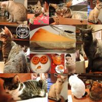 台北市美食 餐廳 咖啡、茶 咖啡館 貓孩在極簡 (極簡咖啡館) 照片