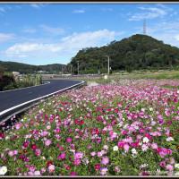 桃園市休閒旅遊 景點 景點其他 楓樹村 照片