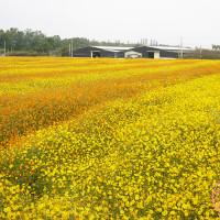 台中市休閒旅遊 景點 觀光花園 2013臺中國際花毯節 照片