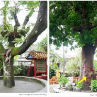 宜蘭縣休閒旅遊 景點 藝文中心 大興社區發展協會 照片