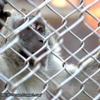 金門縣休閒旅遊 景點 動物園 金門畜產試驗所 照片