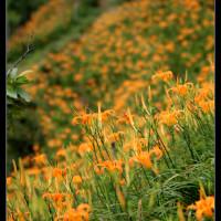 新北市休閒旅遊 景點 觀光果園 江豐農果園 照片