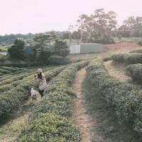 桃園市休閒旅遊 景點 古蹟寺廟 龍潭大池 照片