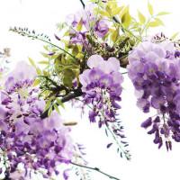 台北市休閒旅遊 景點 觀光花園 台北花卉村 照片