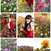 桃園市休閒旅遊 景點 觀光花園 桃園蘆竹花海節 照片