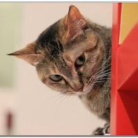 台北市休閒旅遊 住宿 住宿其他 貓館 照片