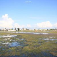 雲林縣休閒旅遊 景點 海邊港口 成龍溼地 照片