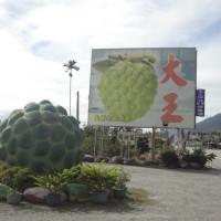 台東縣美食 攤販 水果 大王釋迦 照片