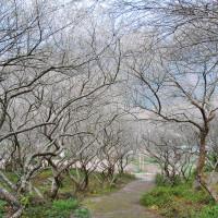 南投縣休閒旅遊 景點 觀光花園 互助國小 照片