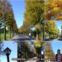 桃園市休閒旅遊 景點 公園 大溪落羽松大道 照片