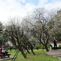 台北市休閒旅遊 景點 公園 志成公園 照片