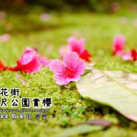 新北市休閒旅遊 景點 景點其他 櫻花公園 照片