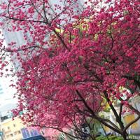 台中市休閒旅遊 景點 景點其他 文昌國小 照片